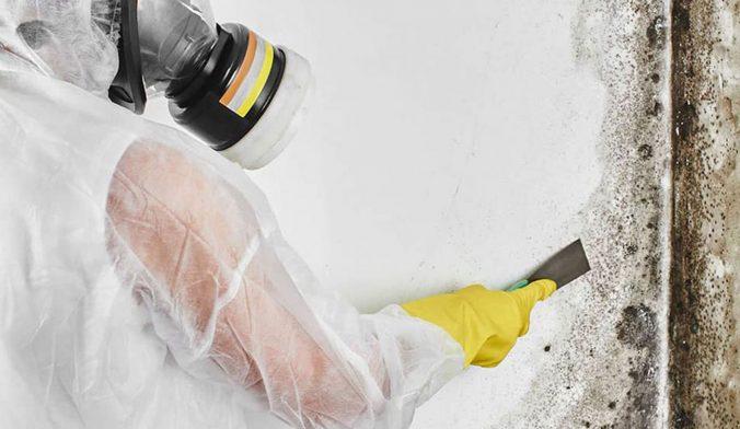 mold remediation diy